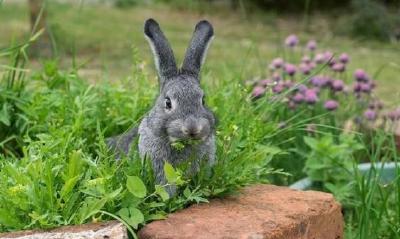 春季养兔防病要重视这四点