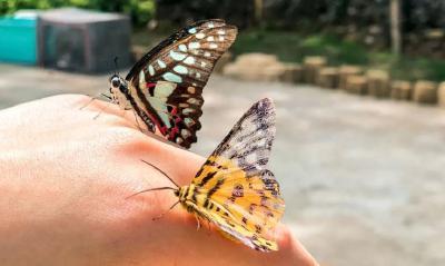 上万蝴蝶来袭,五一去武汉东湖看蝴蝶翩飞!