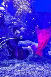 与白鲸抢球,同鲨鱼共舞,武汉这一极地海洋公园,给游客打造多重惊喜