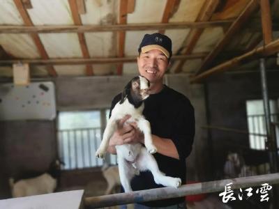 """荆州:大学生""""羊倌"""" 15年创建荆州""""小兰羊"""""""
