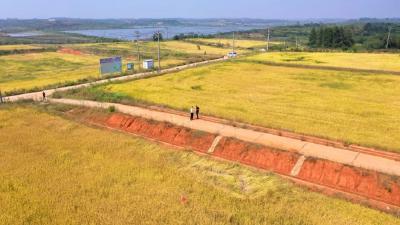 """30万斤!光谷""""太空稻""""收割了"""