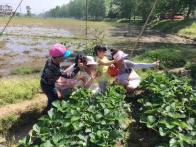 匡河 ▏相約文斗河 采摘草莓季