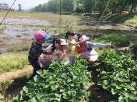 匡河 ▏相约文斗河 采摘草莓季
