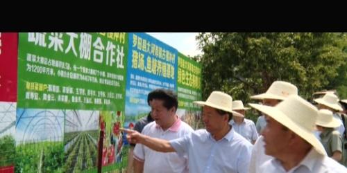 国家电网华中分部党组书记、主任丁广鑫到驻点村指导精准扶贫工作