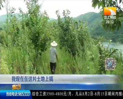 """垄上频道:""""70后""""华农人 坚守山村种板栗"""