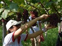 走遍罗田之摘葡萄、赏荷花田园体验游