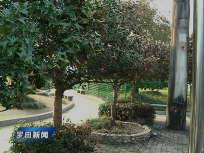 凤城广场:烧毁树木道德败坏 保护环境人人有责