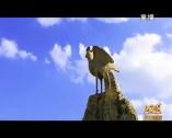 2018春節群眾迎新晚會(上)