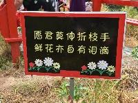 东山湾赏花 南宝山摘桃