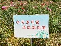 東山灣賞花 南寶山摘桃