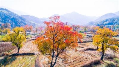 秋賞紅葉正當時