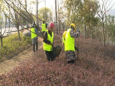 湖北金滿農林公司:搶前抓早補栽補植 全員上陣植樹綠化