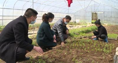 一線 | 羅田縣匡河鎮:統籌做好疫情防控與春季農業生產