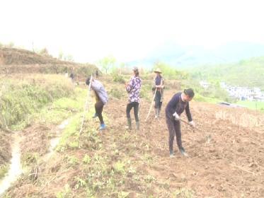 罗田县三里畈镇:发展林下经济  促进乡村振兴