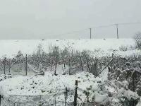 今冬第一场雪