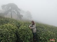 《老君山?云霧?茶》