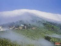 《老君山•云雾•茶》