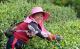 农业科技特派员助力乡村产业振兴