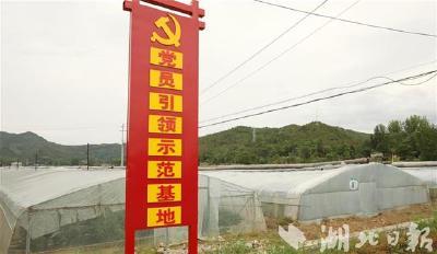 """房县打造""""党员引领示范基地""""促农增收"""