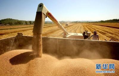 湖北房县:麦浪滚滚收获忙