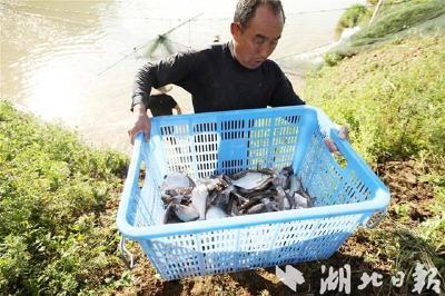 房县养殖名特优鱼带动农民增收