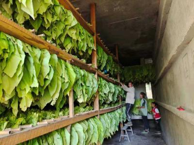 房县上龛乡:服务烟农助增收