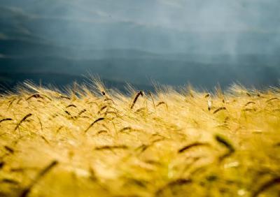 今日秋分,丰年话家乡,谷麦满仓