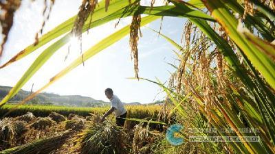 房县:节水工程助粮丰收