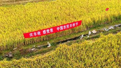房县:机械收割大会战  庆祝农民丰收节