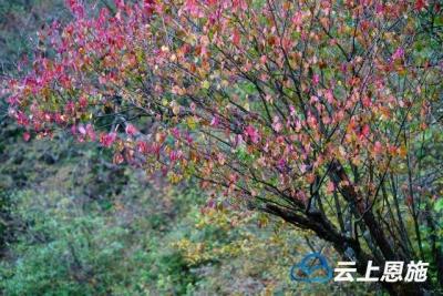 在鹤峰,邂逅最美的秋