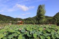 南水北调中线植物园北京园建设稳步推进