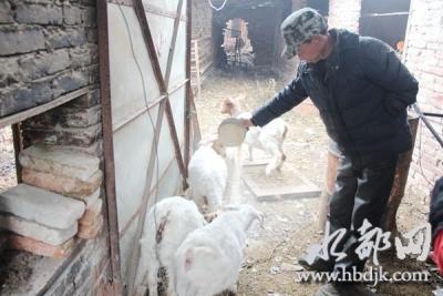 叶华:独臂羊倌撑起致富梦