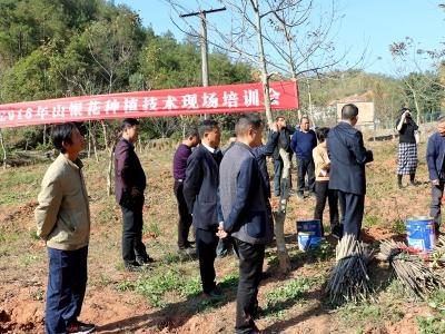"""县农业局坚持""""三到位""""全面提高山银花基地建设质量"""