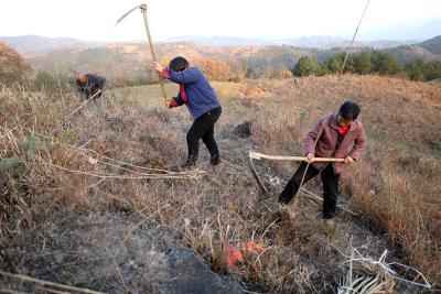 竹山县打响精准灭荒攻坚战 年内力争灭荒3万亩