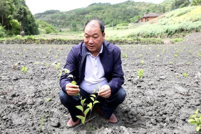蒋余宽:发展五味子带动贫困户致富增收