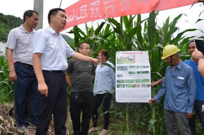 双台乡积极开展粮食病虫害防治工作