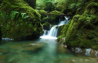 竹山柳林乡·绿源-王素冰-摄