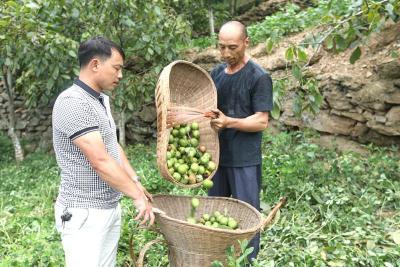 竹山林业科技助推农民种植核桃增收