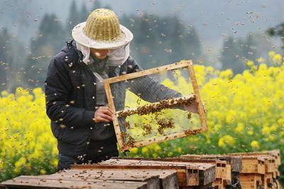 竹山发展养蜂3万箱实现产值6千万