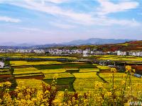 爛漫山花中的美麗鄉村(攝影:王俊)