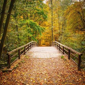 散文:秋日感賦