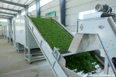 圣水公司加工特种茶助农增收