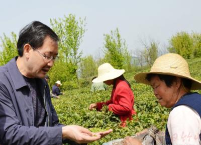 """陳敦橋:擦亮茶品牌 當好""""茶代表"""""""