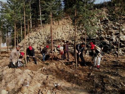 九華山林場志愿者開展暖冬義務植樹活動