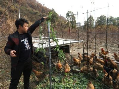 潘口鄉:桃園養雞