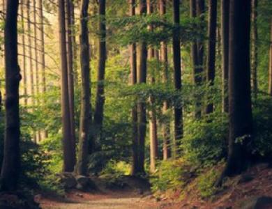 竹山3000名贫困对象为森林资源保驾护航