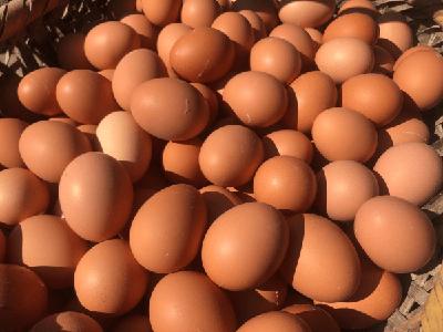 竹山縣佳鑫牧業四萬斤鮮雞蛋滯銷