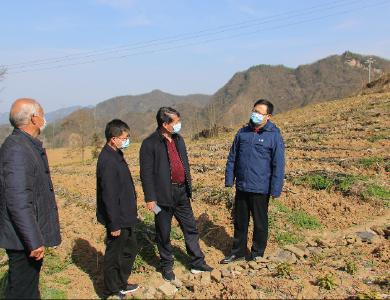陳建平:持續抓好疫情防控 有序開展春耕生產