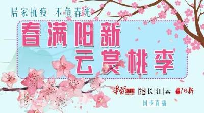 直播|居家抗疫 不負春光!春滿陽新·云賞桃李