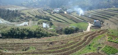文峰鄉:萬畝茶園精細管護已超八成